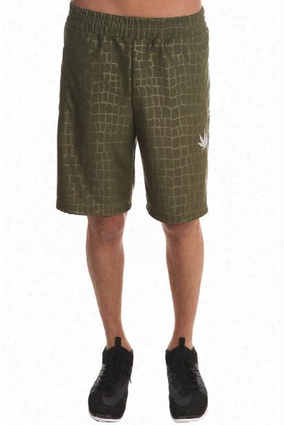 Lucien Pellat-fniet Croc Bermuda Shorts
