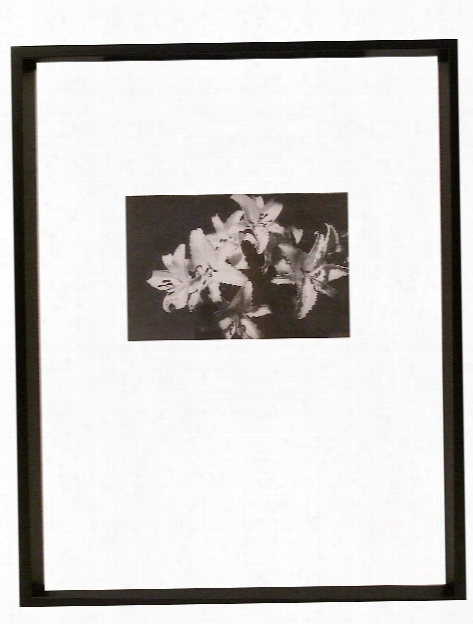 Gallery Collection Frames 11 In. X 14 In. Centered For 5 In. X 7 In.