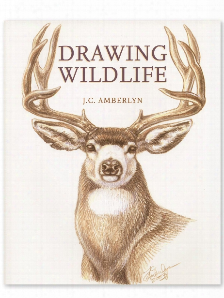 Drasing Wildlife Drawing Wildlife
