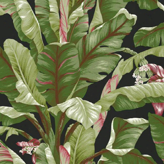 Banana Leaf Wallpaper In Green And Black Design By York Wallcoverings