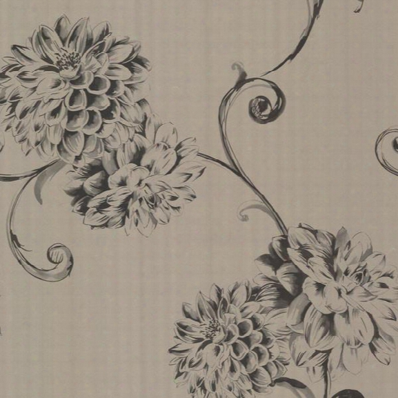 Deliah Sepia Watercolor Dahlia Wallpaper Design By Brewster Home Fashions