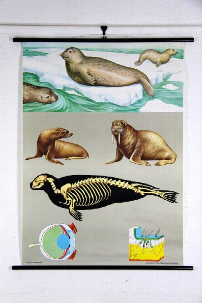 Seal Zoology Wall Chart