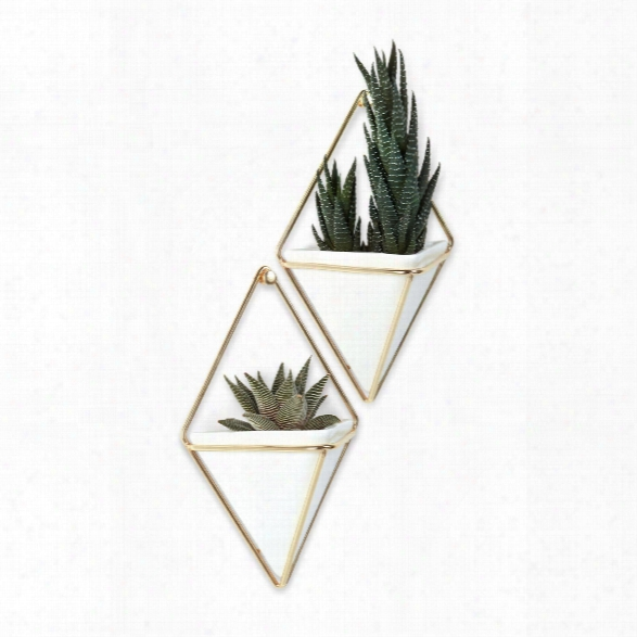 Set Of Two Trigg Wall Displays Small In Brass Design By Umbra