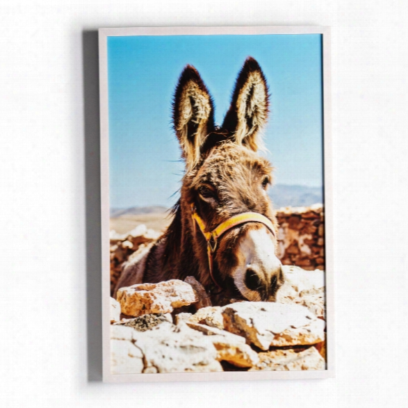 Spanish Burro Wall Art