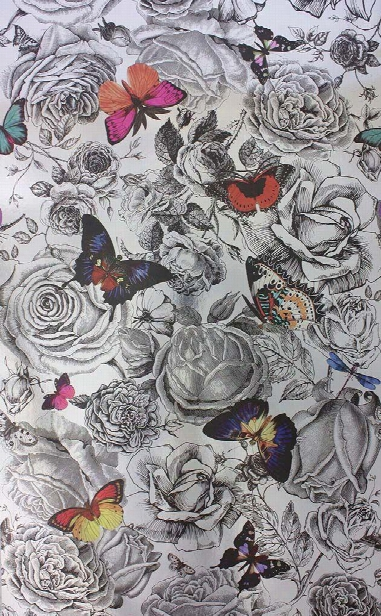 Butterfly Garden Wallpaper In Multicoloured Butterflies On Gray Color By Osborne & Little