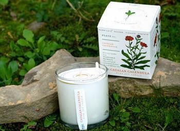 Catalan Calendula Soy Candle Design By Kobo Candles