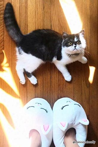 Cat Face Fleece Slippers