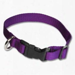 Adjustable Pet Collars 1in In Flat Nylon