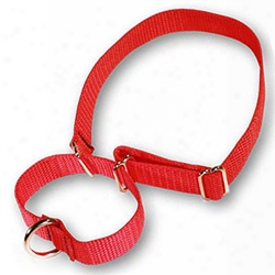 Martingale Pet Collars 1in In Heavywieght Polypro By 14-20