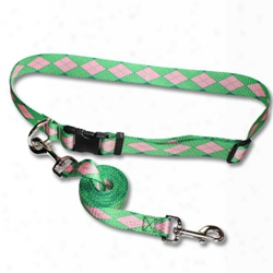 Jogger's Belt/leash Combo-with Patterned Pq Polyester