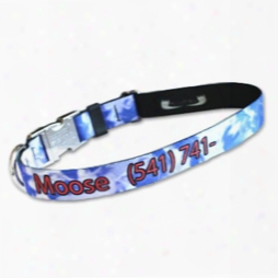 Pet Id Collar Made With Patterned Pq Polyester Webbing