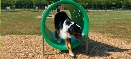 Bark Park Doggie Crawl Exercise Equipment