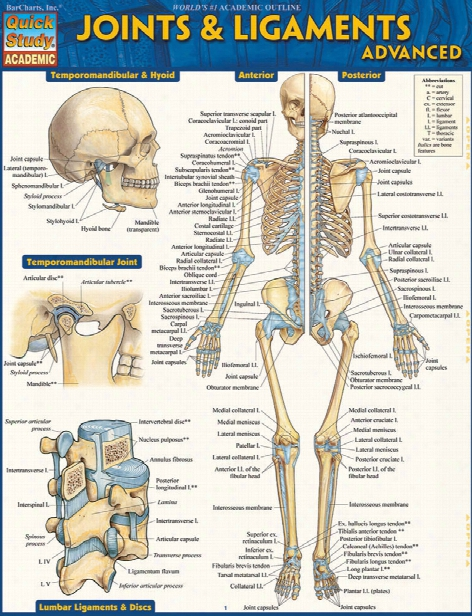 Barcharts Barcharts Advanced Joints And Ligaments Reference Guide - Unisex - Medical Supplies