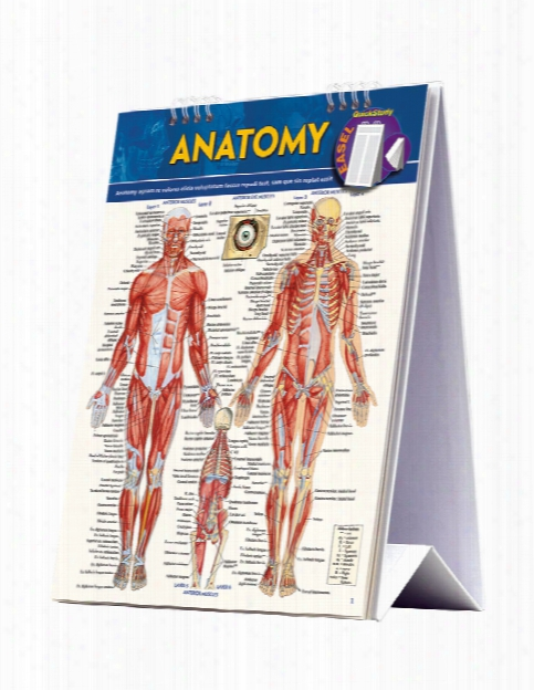 Barcharts Barcharts Anatomy Easel - Unisex - Medical Supplies
