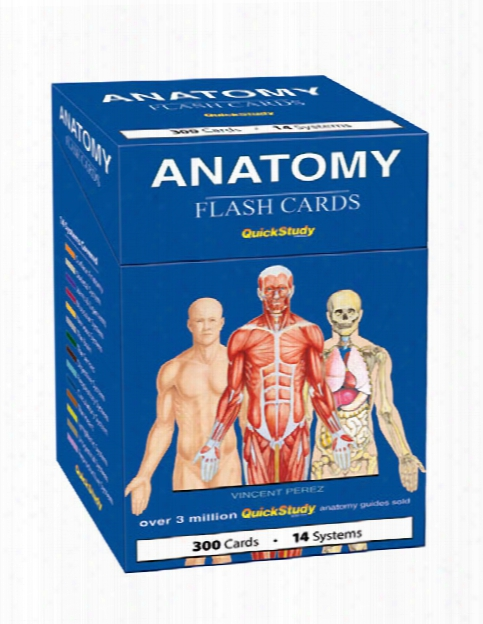 Barcharts Barcharts Anatomy Flash Cards - Unisex - Medical Supplies