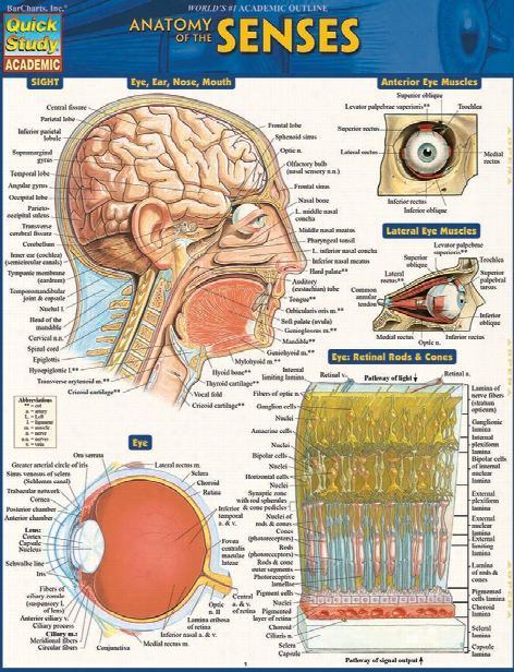Barchar Ts Barcha Rts Anatomy Of The Senses Reference Guide - Unisex - Medical Supplies