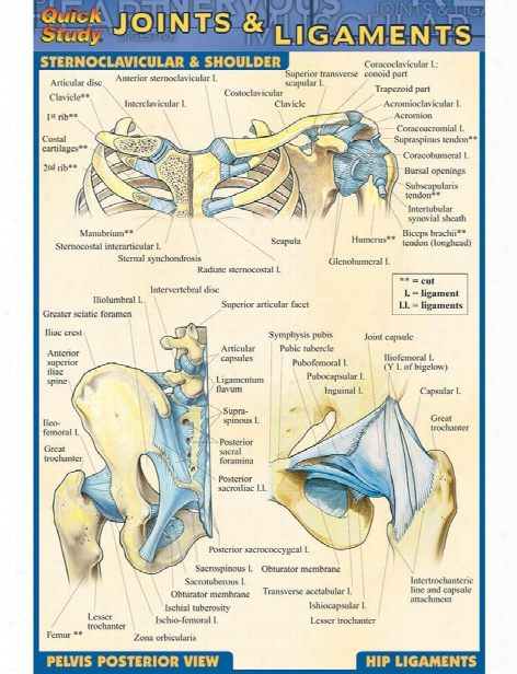 Barcharts Barcharts Joints And Ligaments Pocket Guide - Unisex - Medical Supplies