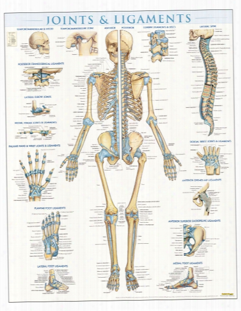 Barcharts Barcharts Joints - Unisex - Medical Supplies