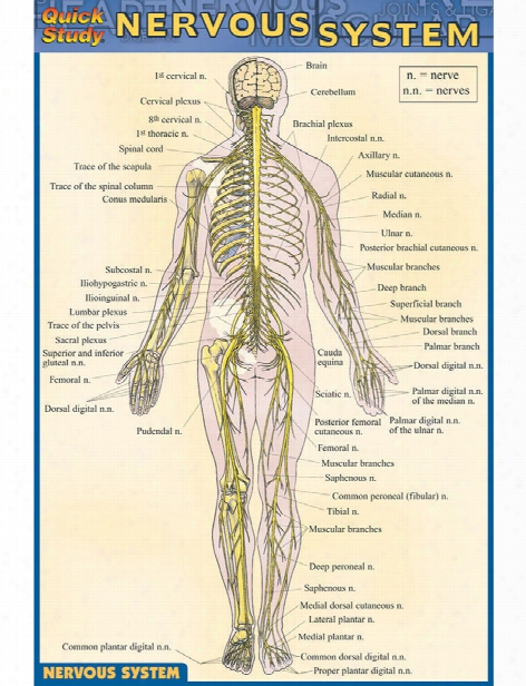 Barcharts Barcharts Nervous System Pocket Guide - Unisex - Medical Supplies