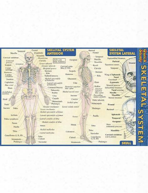 Barcharts Barcharts Skeletal System Pocket Guide - Unisex - Medical Supplies