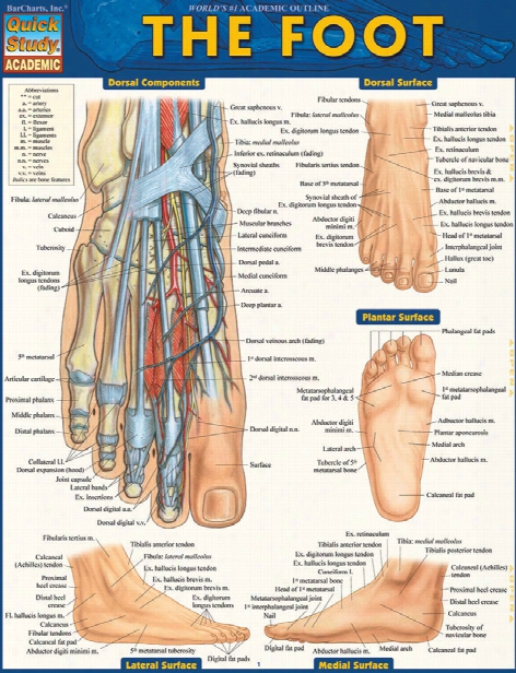 Barcharts Barcharts The Foot Reference Guide - Unisex - Medical Supplies