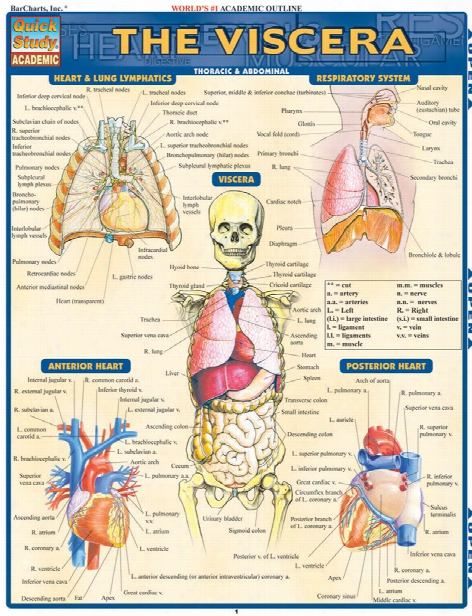 Barcharts Barcharts The Viscera Reference Guide - Unisex - Medical Supplies