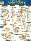 BarCharts BarCharts Anatomy Reference Guide - unisex - Medical Supplies