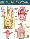 BarCharts BarCharts Dental Anatomy Reference Guide - unisex - Medical Supplies